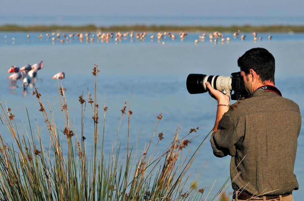 Birdwatching: Birdwatching Delta del Po   Hotel Milan
